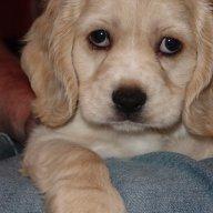 tuppydog